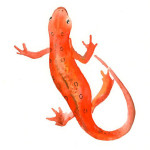 BYOD and Poisonous Newts - Micro Visions, Inc.